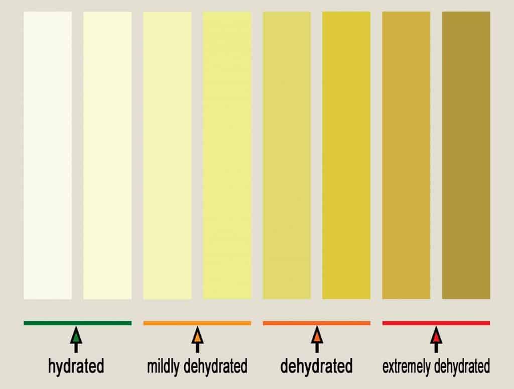 urine hydration chart headache after running
